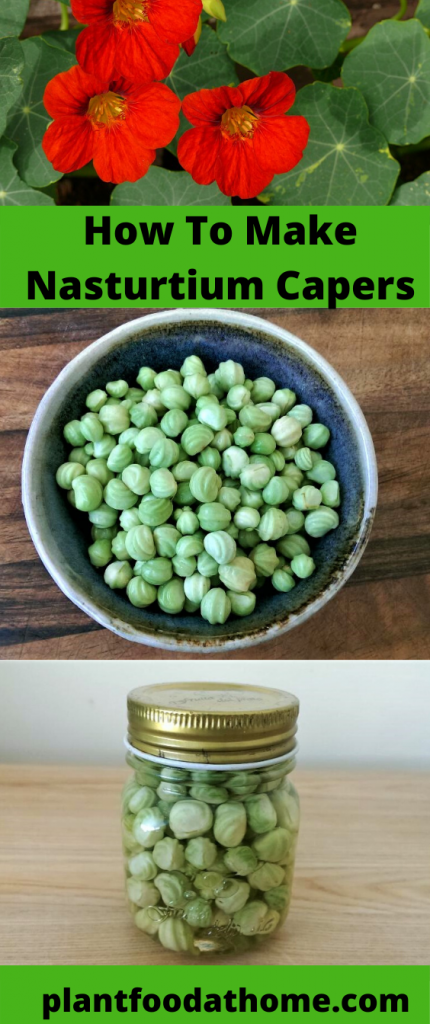 Turn nasturtium seeds into delicious capers, also known as Poor Man's Capers. This recipe shows you how  #nasturtium #recipes #capers Via @plantfoodathome.com