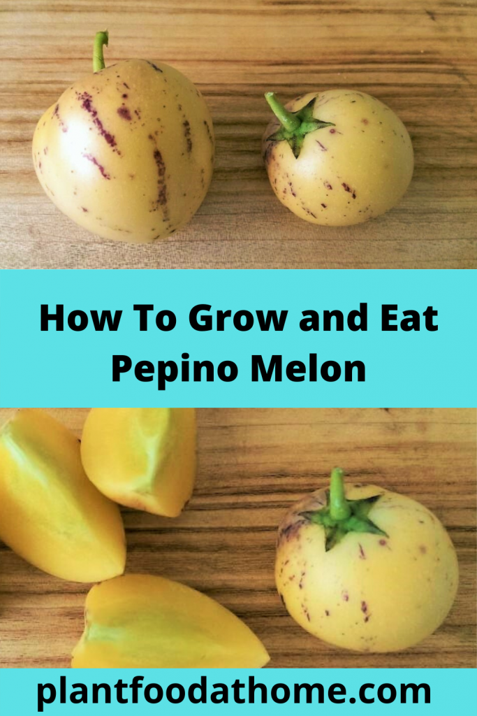 How to grow and eat Pepino Melon