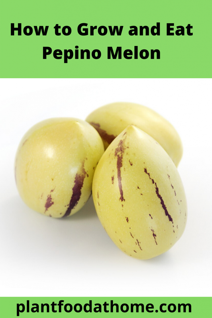 How to Grow and Eat Pepino Melon Fruit
