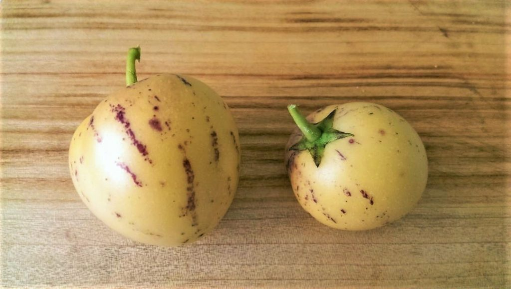 How To Grow Pepino Melon