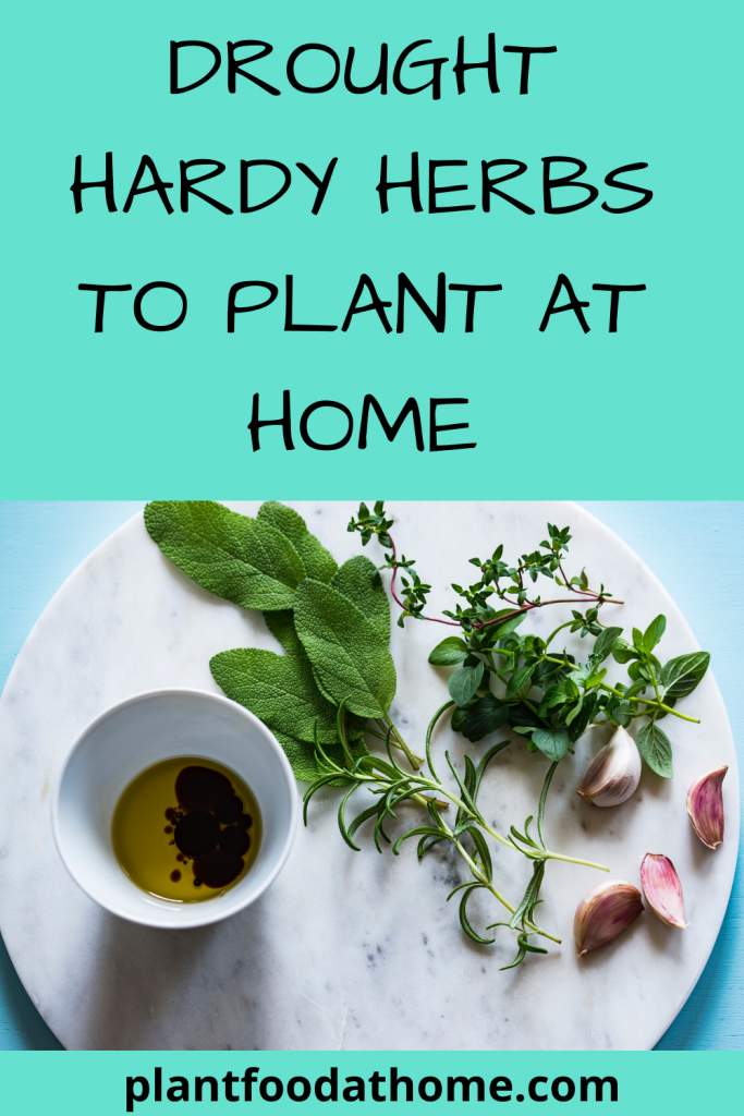Drought Hardy Culinary Herbs To Plant