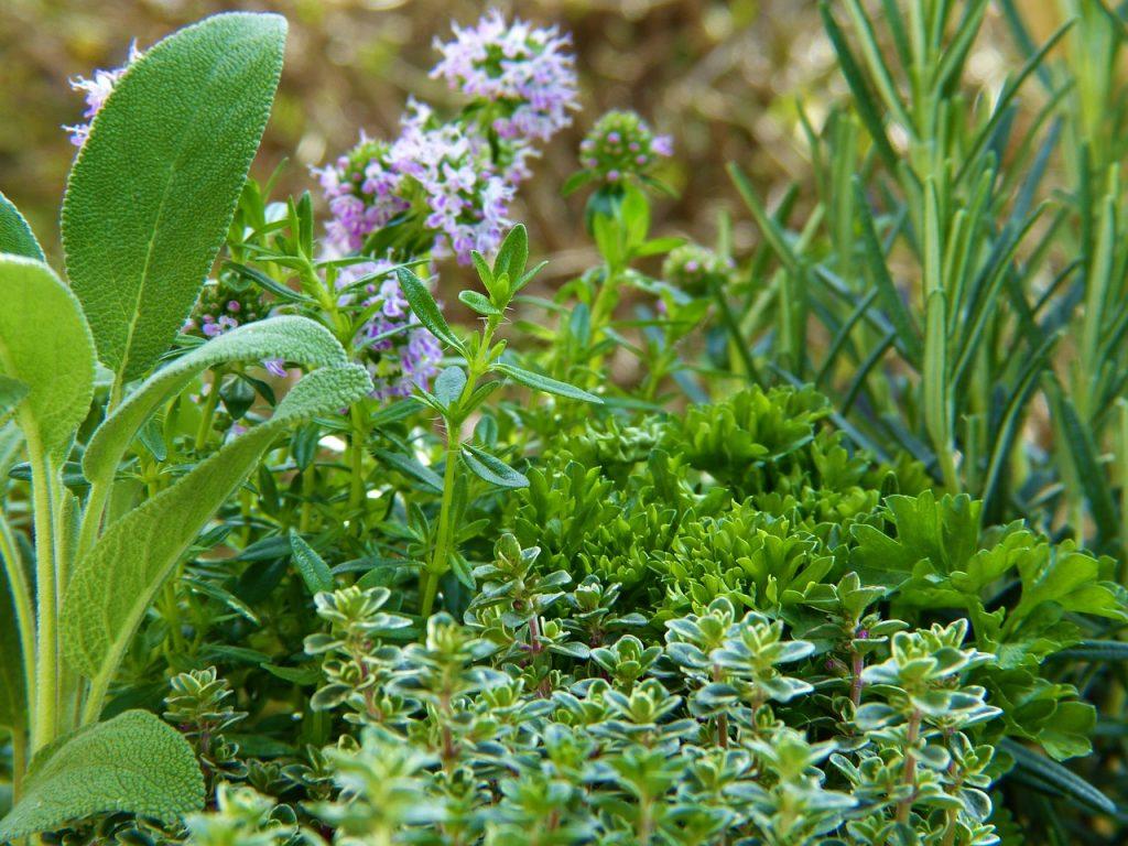 Drought Tolerant Herb Garden
