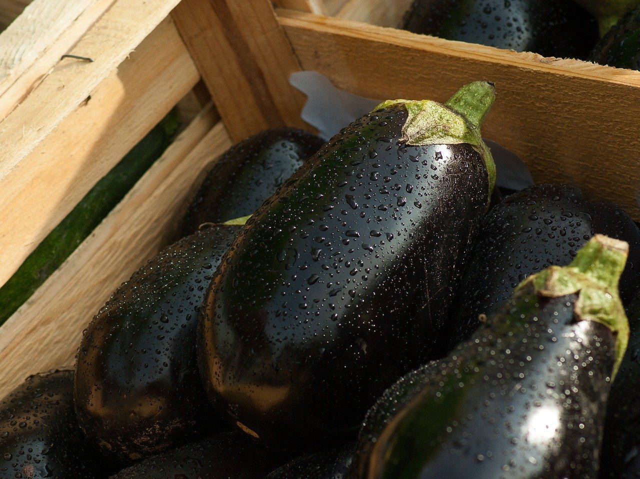How To Grow Lots of Eggplants