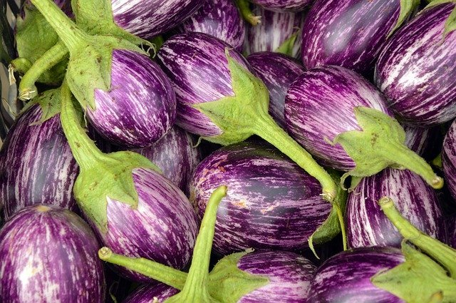 Purple and White stripe Eggplant - How to Grow Eggplant