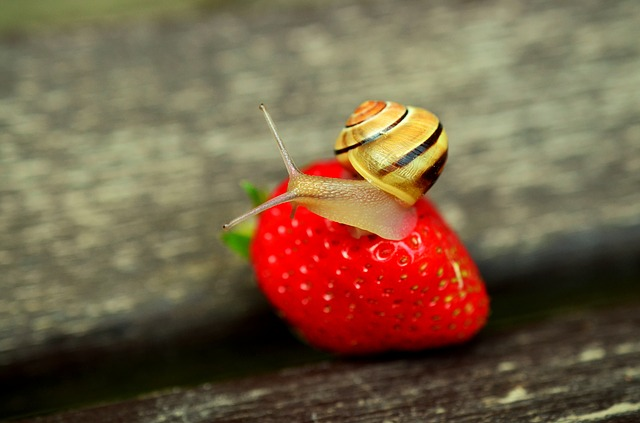Strawberry Pests - How To Grow Strawberries