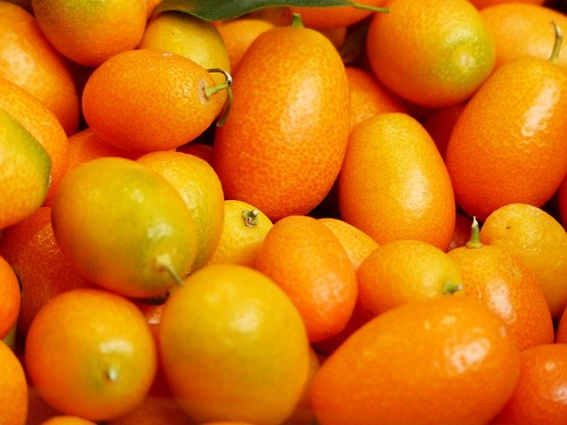 Nagami Kumquats - Kumquat tree care