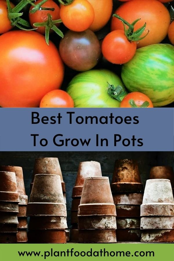 The Best Tomatoes To Grow In Pots