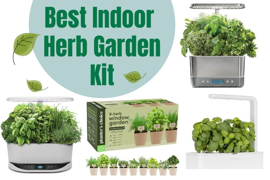 The Best Indoor Herb Garden Kit