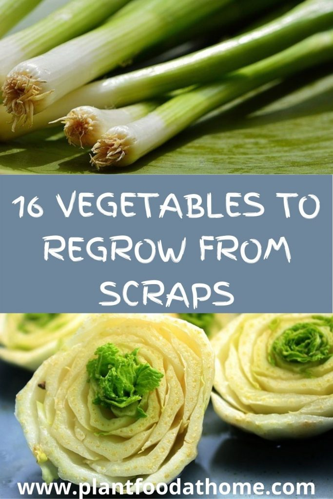 16 Vegetables You Can Regrow From Kitchen Scraps