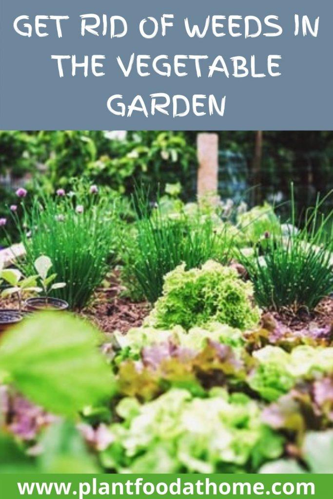 Get Rid of Weeds in the Vegetable Garden