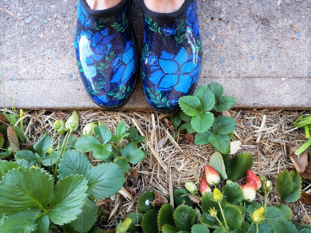 Review of Slogger Clog Gardening Shoes