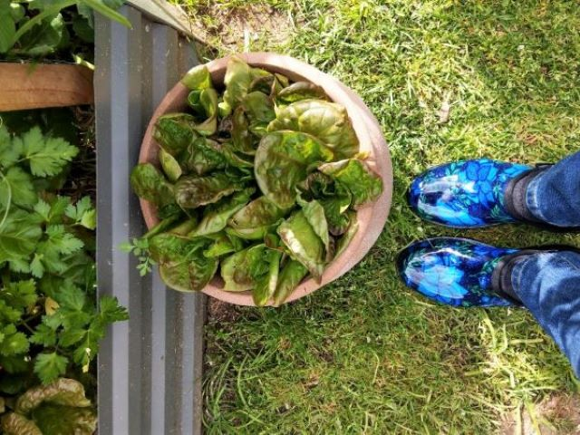 Sloggers Gardening Shoes Review