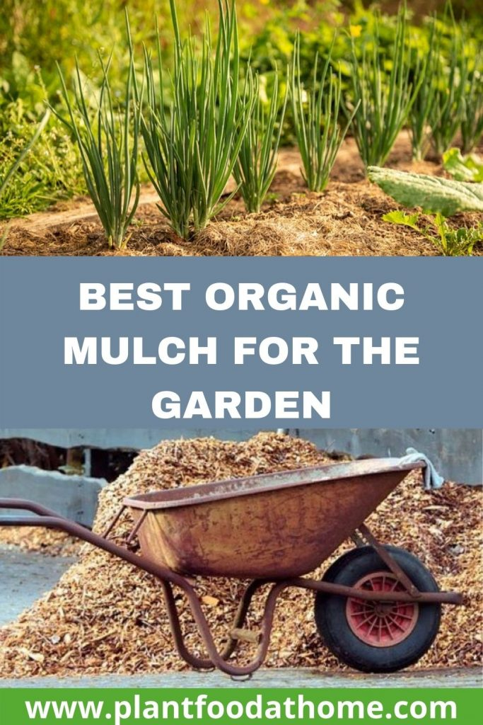 Best Organic Mulch for the Garden