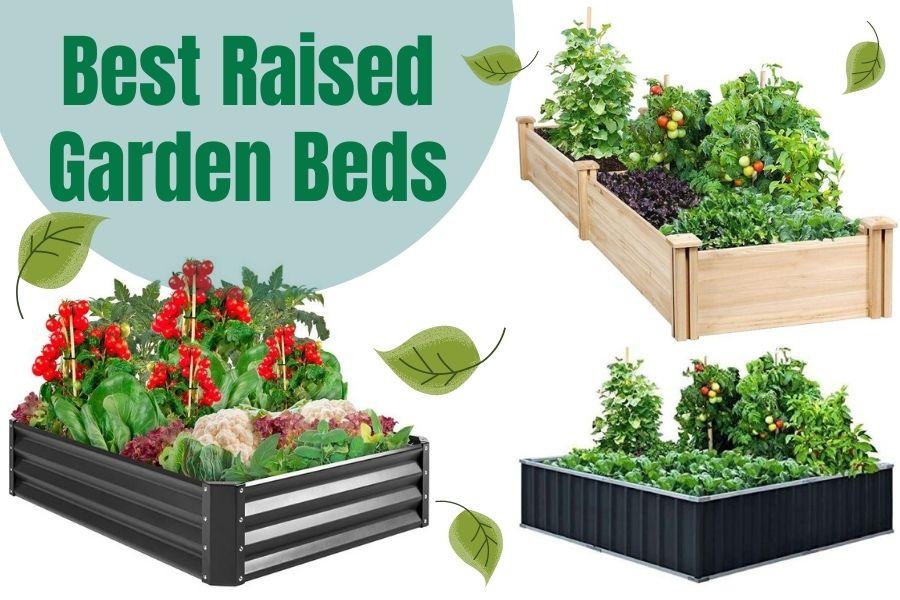 Best Raised Garden Beds Review
