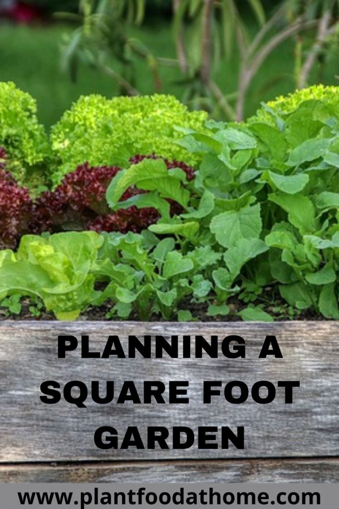 Planning a Square Foot Garden for Abundant Vegetables