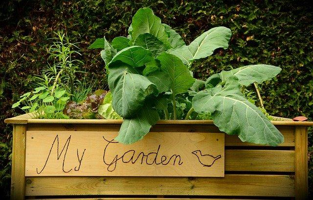 Raised Garden Bed - Planning A Square Foot Garden