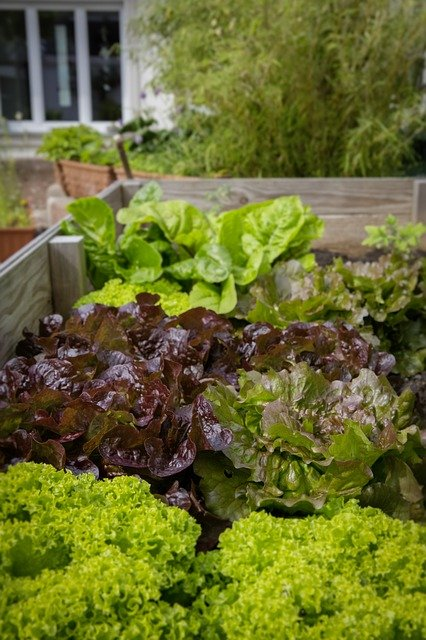 Square Foot Gardening - Planning A Square Foot Garden