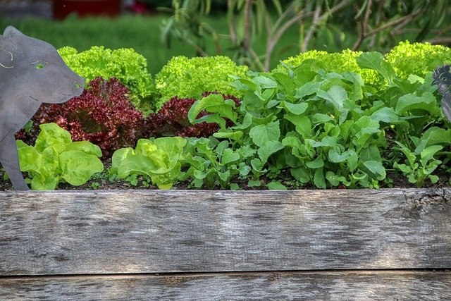 Square Foot Gardening in a Raised Garden Bed