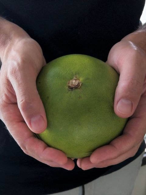 Holding a Pomelo - What is Pomelo and How To Eat One