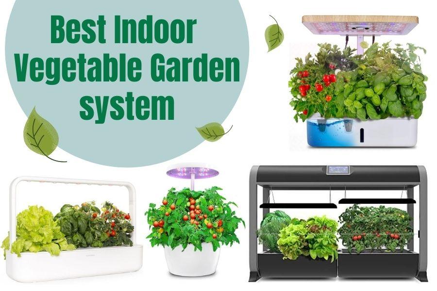 Best Indoor Vegetable Garden System