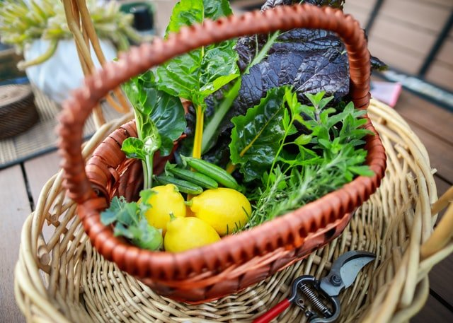 Garden Harvest - How to Start a Vegetable Garden