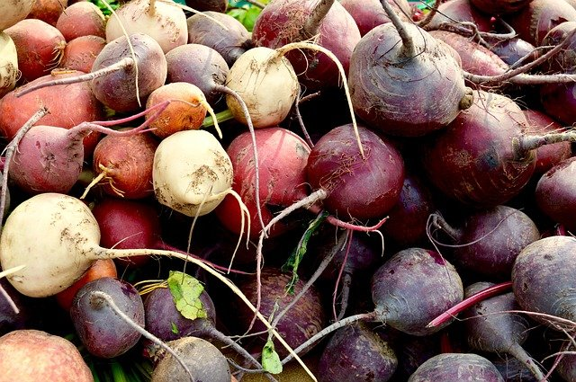 How to Grow Beets - Variety of Beets