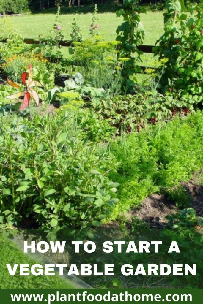 How to Start a Vegetable Garden Beginners Guide