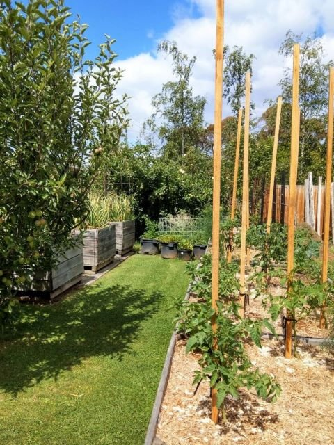 How to Start a Vegetable Garden for Beginners Guide