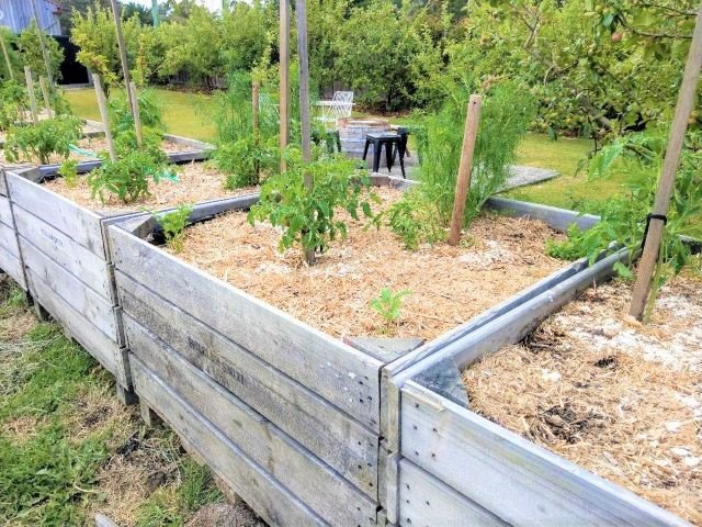 How to Start a Vegetable Garden for Beginners