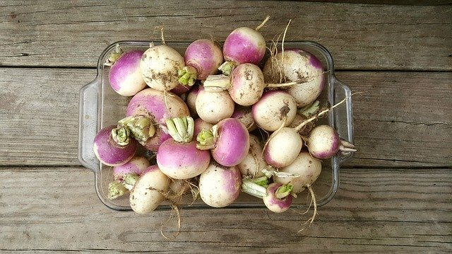 Freshly Harvested Turnips - Turnips Vs Radishes What's the Difference