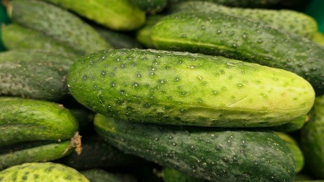 Reasons Why Your Cucumbers Are Turning Yellow