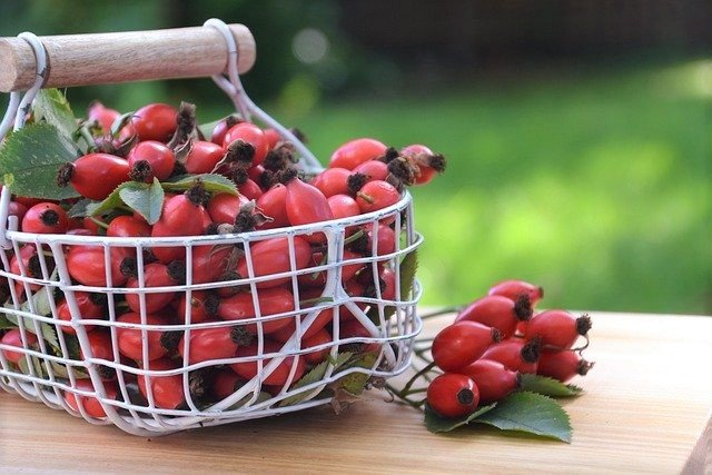 Rose Hip Harvest - What Are Rose Hips and How to Eat Them