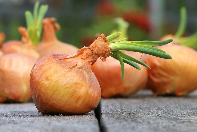 Sprouting Onion - Are Onions with Sprouts Edible