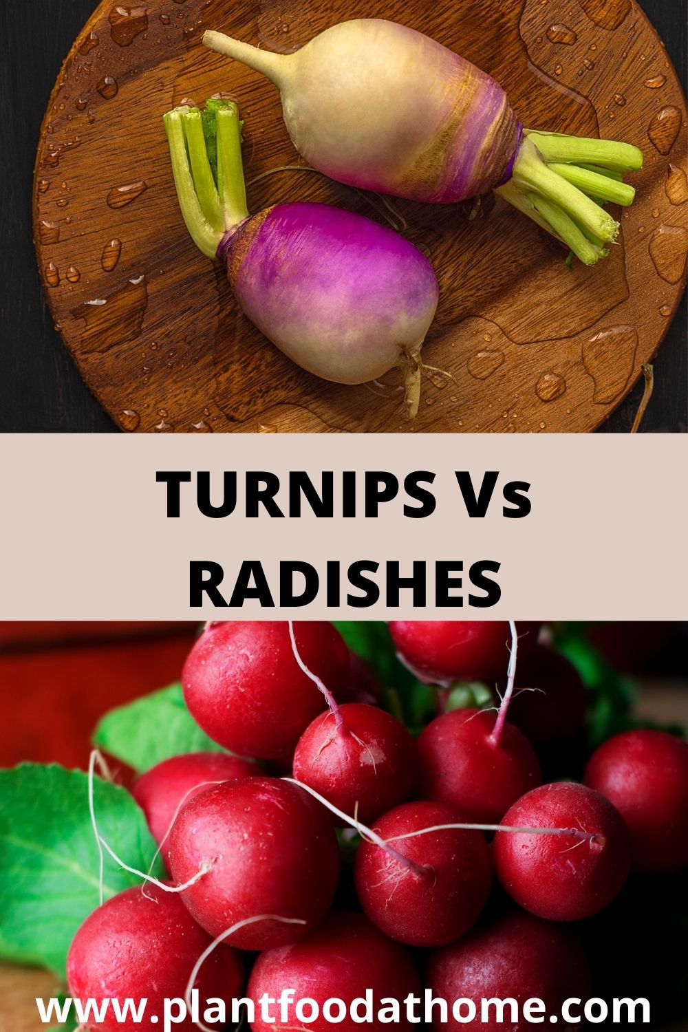 Turnips Vs Radishes - What is the Difference