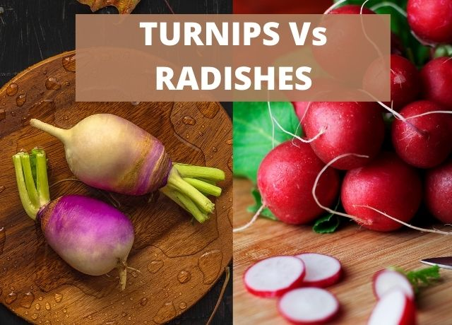 Turnips Vs Radishes - What's the Difference