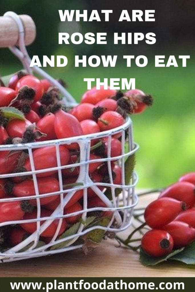 What are Rose Hips and How to Eat Them