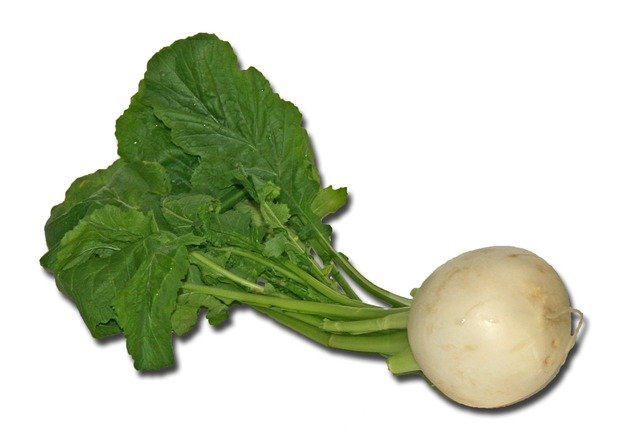 White Turnip with Leaves - Turnips Vs Radishes What's the Difference