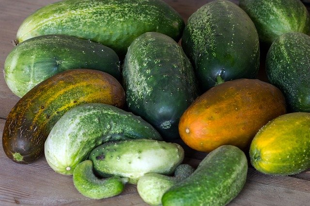 Yellow Cucumbers - Reasons Why Your Cucumbers Are Turning Yellow