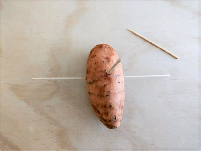 How to Grow Sweet Potato Slips in Water - Inserting Toothpicks