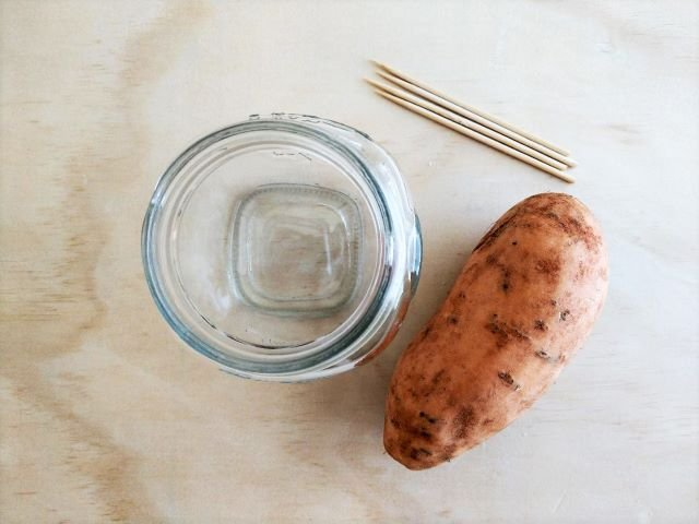 How to Grow Sweet Potato Slips in Water - Supplies Needed
