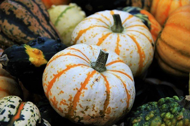 Curing and Storing Pumpkins