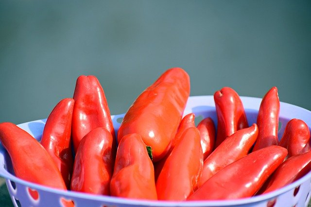 Red Jalapeno Chili Peppers