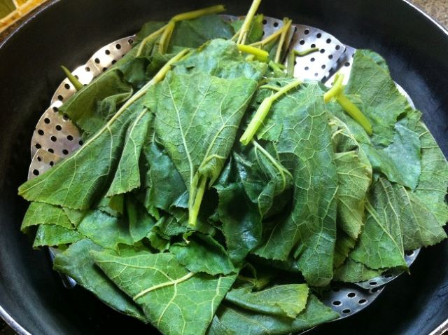 Are pumpkin Leaves Edible - a bunch of pumpkin leaves for eating