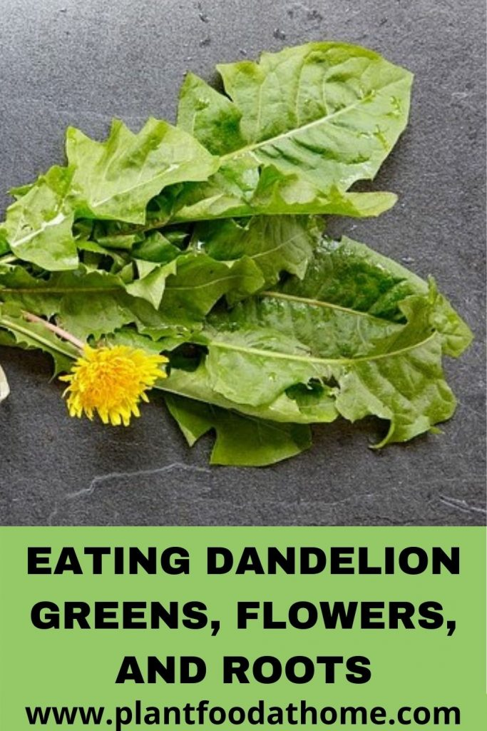 Eating Dandelion Greens, Flowers, Roots