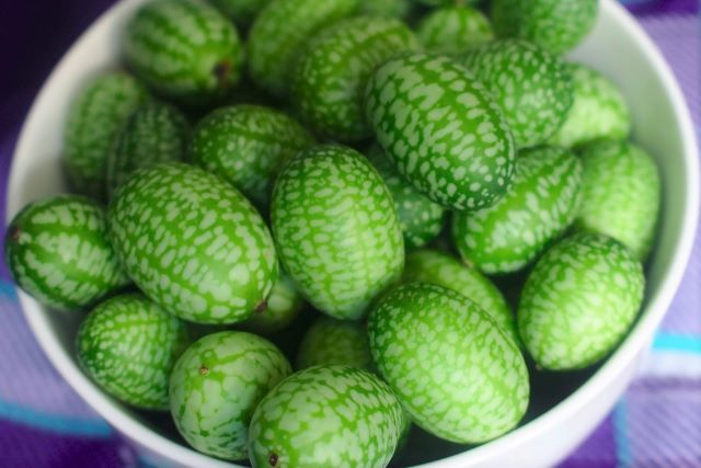 Growing Cucamelons - Mouse Melon