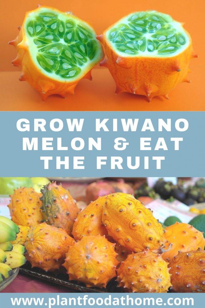 Grow Kiwano Melon and Eat the Fruit