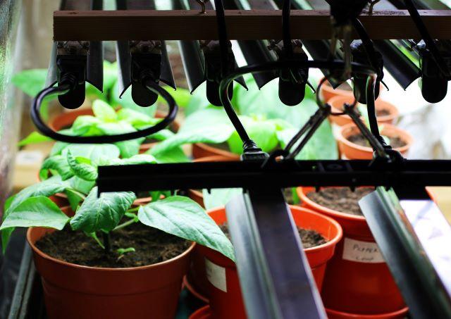 How to Start Vegetables Seeds Under Grow Lights