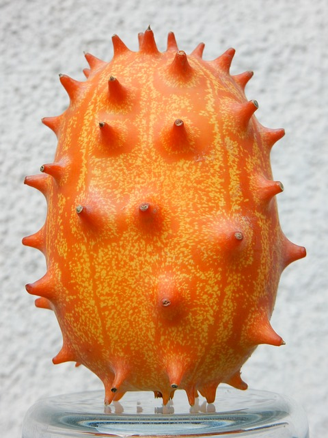 Kiwano Melon Growing Horned Melon and Eating the Fruit