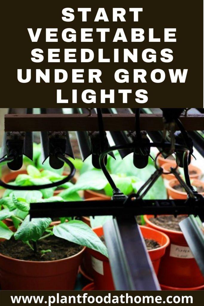 Start Vegetable Seedlings Under Grow Lights
