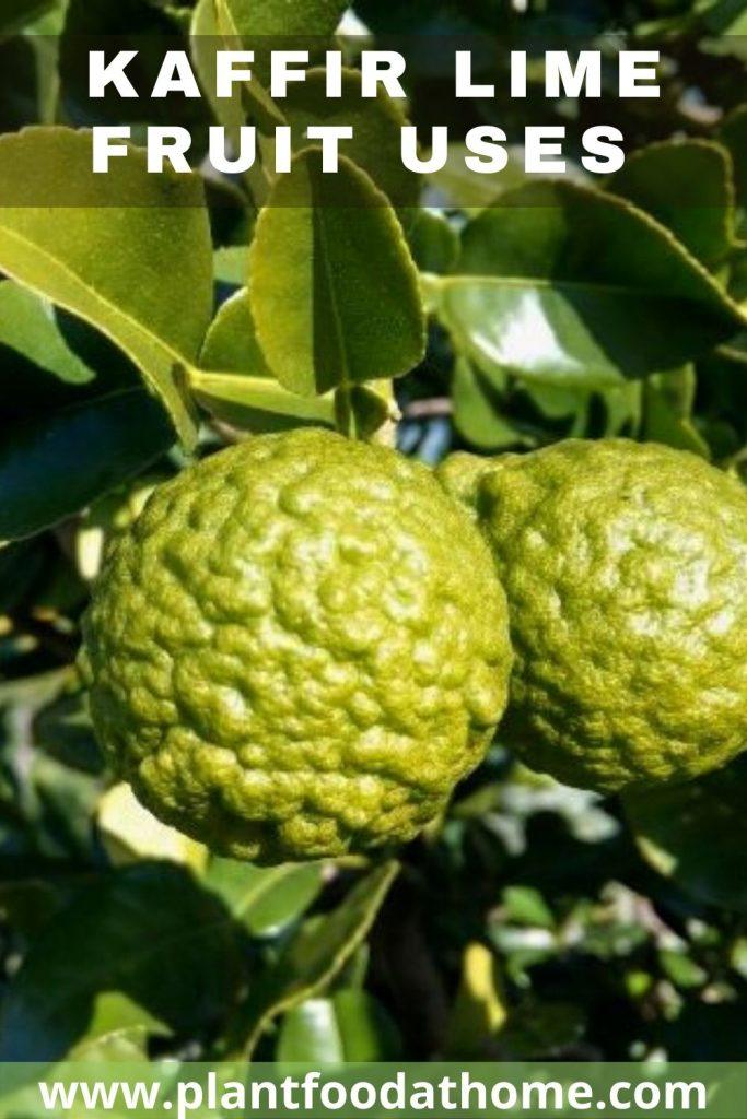Kaffir Lime Fruit Uses